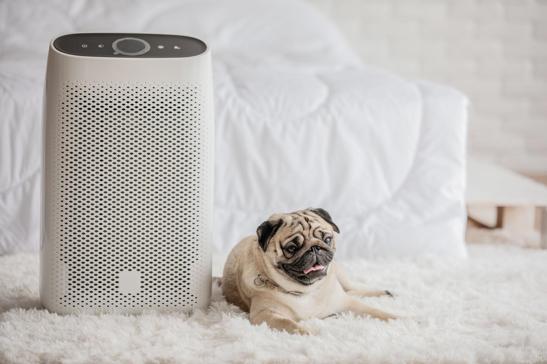 dog laying beside air purifier